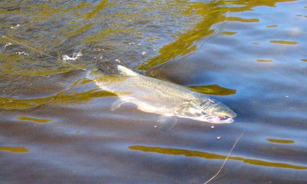 Olga-Creek-Fishing-Lodge-Alaska-Vacation14