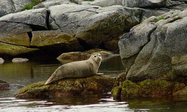 Wildlife-Olga-Creek-Lodge-Alaska-Wildlife-Vacation02