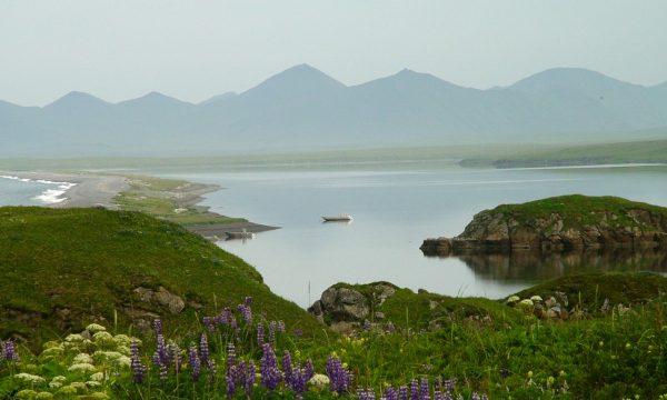 Wildlife-Olga-Creek-Lodge-Alaska-Wildlife-Vacation03