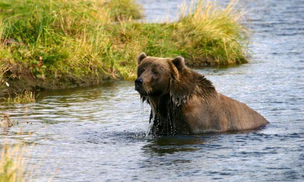 Wildlife-Olga-Creek-Lodge-Alaska-Wildlife-Vacation08