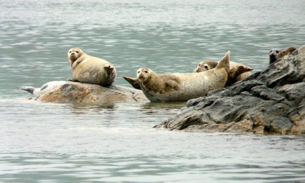 Wildlife-Olga-Creek-Lodge-Alaska-Wildlife-Vacation09