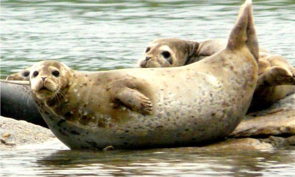 Wildlife-Olga-Creek-Lodge-Alaska-Wildlife-Vacation10
