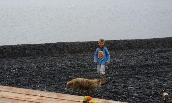Wildlife-Olga-Creek-Lodge-Alaska-Wildlife-Vacation14