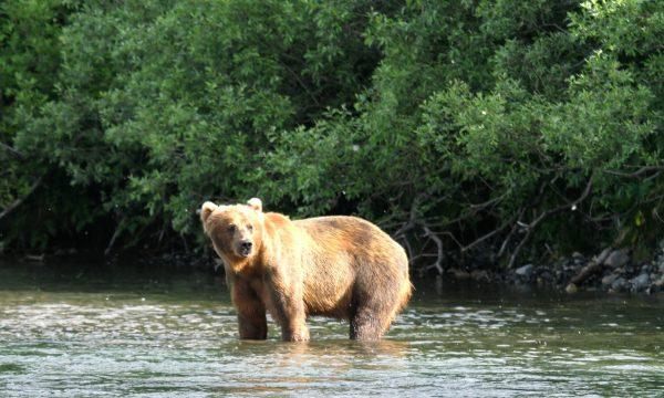 Wildlife-Olga-Creek-Lodge-Alaska-Wildlife-Vacation16