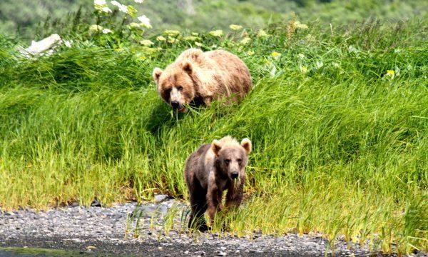 Wildlife-Olga-Creek-Lodge-Alaska-Wildlife-Vacation18
