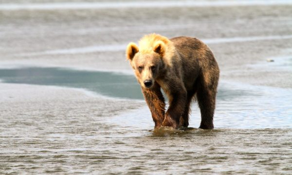 Wildlife-Olga-Creek-Lodge-Alaska-Wildlife-Vacation19