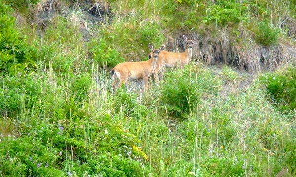 Wildlife-Olga-Creek-Lodge-Alaska-Wildlife-Vacation22