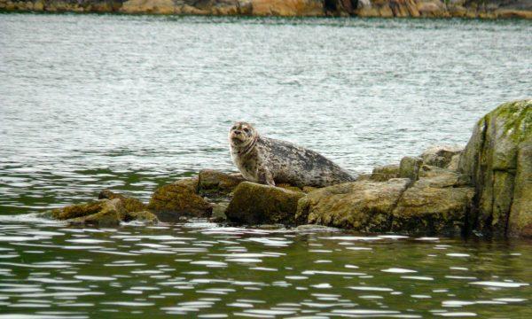 Wildlife-Olga-Creek-Lodge-Alaska-Wildlife-Vacation23
