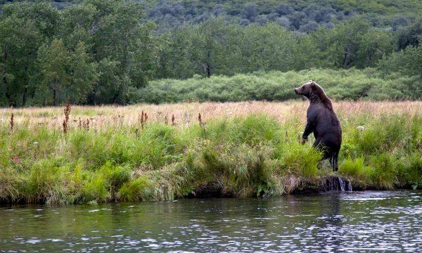 Wildlife-Olga-Creek-Lodge-Alaska-Wildlife-Vacation26