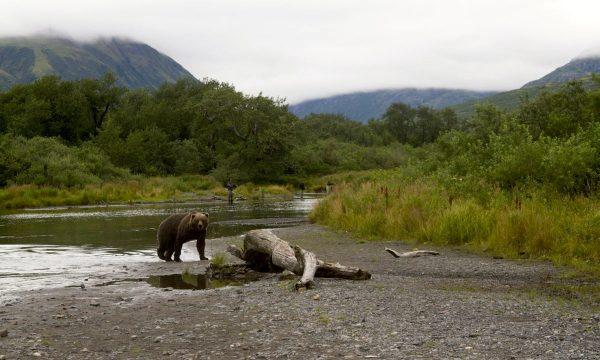 Wildlife-Olga-Creek-Lodge-Alaska-Wildlife-Vacation27